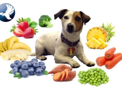 Dog – Healthy foods