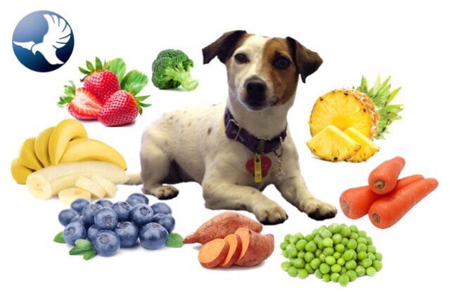 Foods High In Vitamin K For Dogs