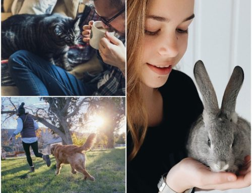 How to choose the right pet for you and your lifestyle