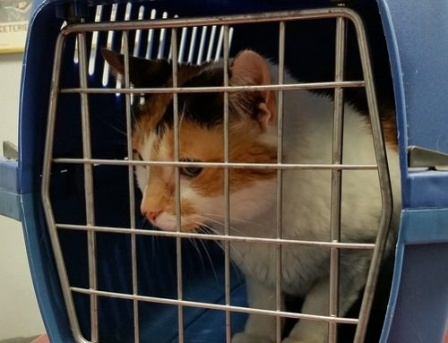10 tips for transporting your cat